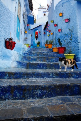 Chefchauoen is believed to have been painted blue to symbolise the sky and heaven and to remind residents to live a ...
