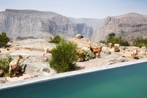 The infinity pool sits right on the lip of the gorge.
