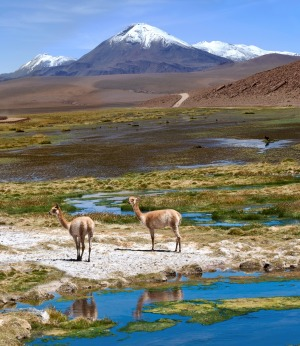 On the road through the Andes near Paso Jama, Chile-Argentina-Bolivia.