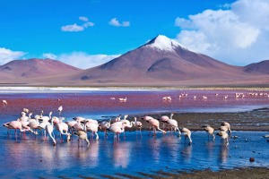 Flamingoes in Laguna Colorada, Atacama Desert in Bolivia.