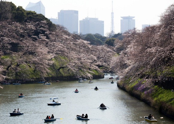 People ride row boats near cherry trees in bloom as the Tokyo Tower stands at the Chidorigafuchi moat in Tokyo, Japan. ...