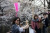 People pose for selfie photographs in front of cherry trees in bloom in Tokyo, Japan. Japan's cherry blossom season is ...