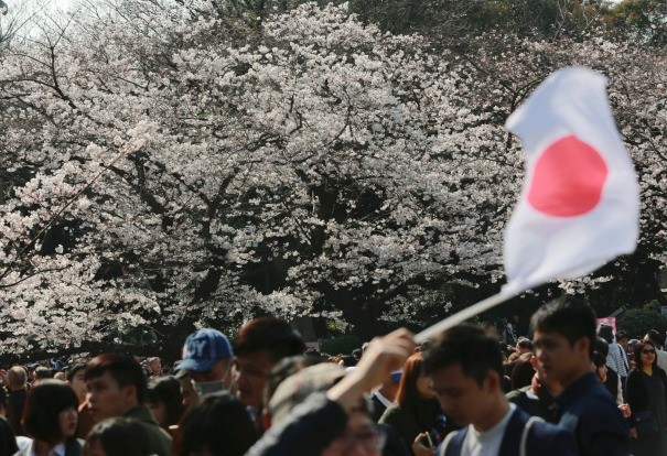 A visitor waves a Japanese flag near blooming cherry blossoms at Ueno Park in Tokyo. Cherry blossom season has ...