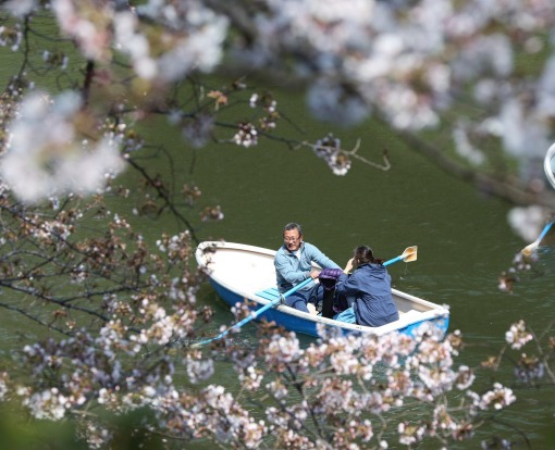 A couple on a boat enjoy the blooming cherry blossoms along the Chidorigafuchi imperial moat in Tokyo.