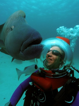 Richard Fitzpatrick under water saying hi to a maori wrasse with a SeaWalker.