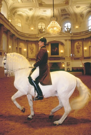 Horses under the gleaming chandeliers at the Spanish Riding School of Vienna display grace and strength.