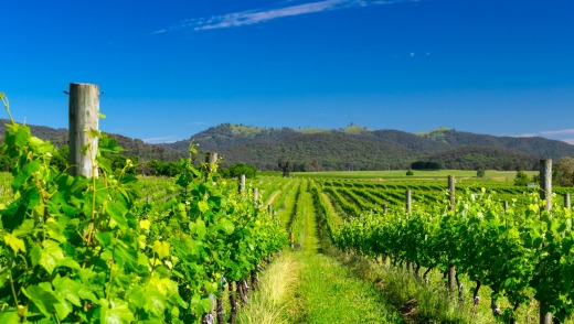 Visitors can enjoy the flavours of Italy at Pizzini, one of five wineries on the 'Prosecco Road' in King Valley.