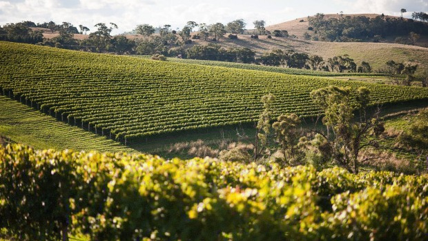 Sample cool-climate wines in Orange, New South Wales.