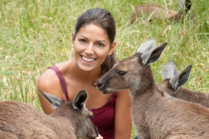 Tourists want to pet kangaroos.