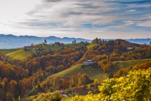 Autumn vineyards in southern Styria.