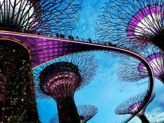 Standing in awe of these amazing techno-nature super trees in Gardens by the Bay in Singapore at twilight.