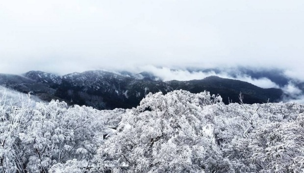 The early arrival of snow at Mt Buller, with 10 - 15 centimetres of fresh snow falling on Sunday, the the resort has ...