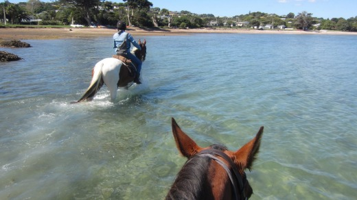The transportation takes the coastal route on Waiheke Horseworx' wineries tour.