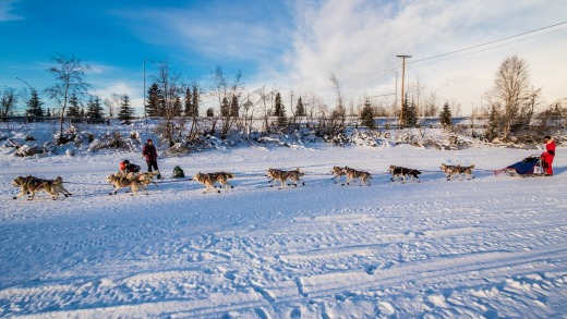 A musher and his team race up the Chena River just after the start of the Yukon Quest.