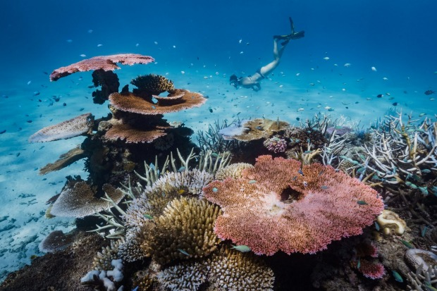 Exploring the outer Great Barrier Reef during my stay on the secluded Orpheus Island, North Queensland.