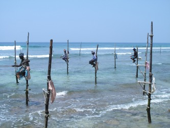 "These traditional stilt fishermen are now a tourist attraction and 1000 rupees is paid to their ""handler"" for the ..."