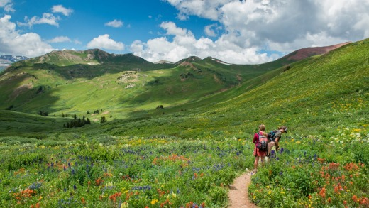 Hikers stop to admire the flowers on the Crested Butte side of the West Maroon Trail.