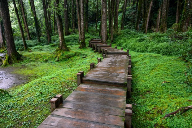 A forest boardwalk in Taiwan's popular Alishan National Scenic Area.