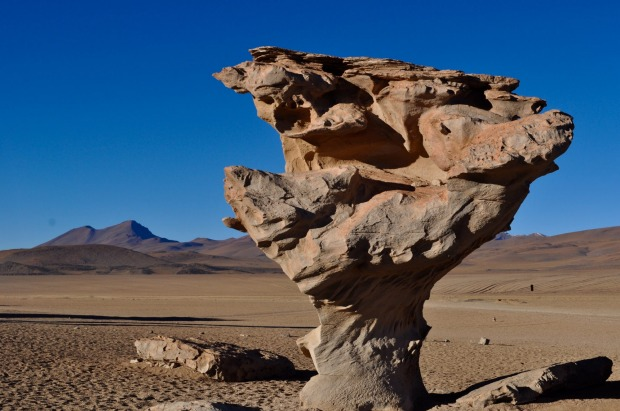 This photo is of the Stone Flower in the Bolivian desert after a few eventful days - wheel fell off our 4WD and then the ...
