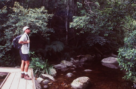 Washpool National Park, NSW. Part of the Gondwana Rainforests of Australia, this World Heritage park is home to one of ...