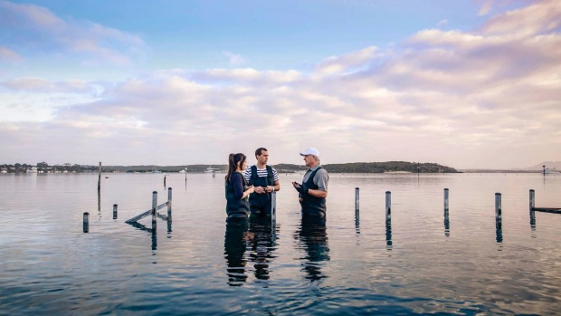 Oyster Farm Tours in Coffin Bay, South Australia let you wade out into the water and source your own tasty oysters.