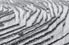 For a couple of months a year, this fishing village in China will display a spectacular sight of seaweed harvesting. The ...