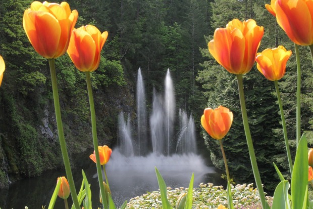 The water feature at Butchart Gardens, Vancouver Island, Canada. A beautiful place to visit. Photo taken 9 May 2017.