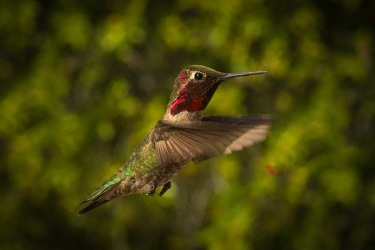 This image was taken in May 2017 at El Portal, California. Sitting on the back verandah of our El Portal B&B just ...