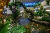 The Orchid Garden (Koi Pond) in Terminal 2, Changi Airport.