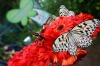 This 330 sqm, two-storey open-air garden is home to more than 1,000 free roaming butterflies that are native to ...