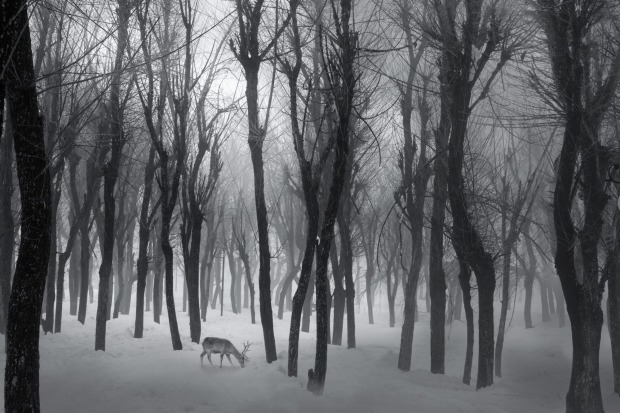 A very foggy morning in the valley near Anantnag, Kashmir after a fresh snowfall.  The valley once dubbed Valley of ...