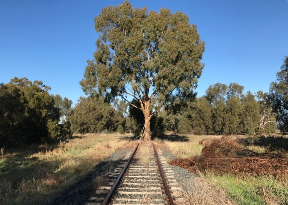 We came across this tree in country New South Wales.  The railway looked in very good condition as if it had been used ...