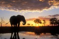 Our first cover image from August 25, 2007. Chobe National Park in Botswana.