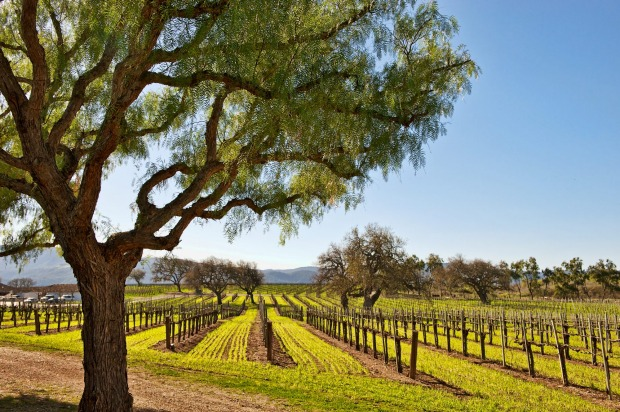 Wine Country, Santa Barbara.