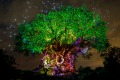 The Tree of Life at Disney's Animal Kingdom lights up.