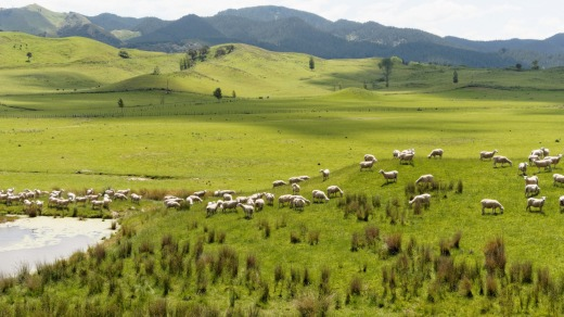The beautiful lush scenery of Wairarapa, in the south of New Zealand's North island.