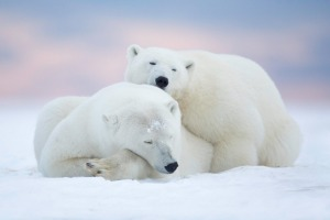 Tour includes a visit to Churchill Wildlife Management Area in search of polar bears.