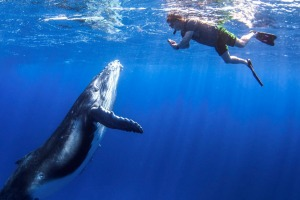 Swim with whales in Tonga.