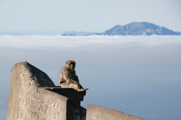 GIBRALTAR SENTINEL My wife and I were visiting Gibraltar from a small cruise ship. At the top of the famous Rock of ...