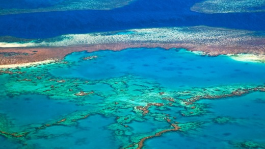The Great Barrier Reef has suffered unprecedented levels of bleaching in recent years.