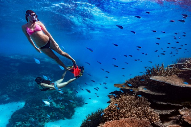 Taking the plunge into the pristine underwater world of the Great Barrier Reef on Orpheus Island, North Queensland.