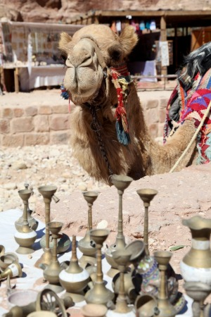 Shopping for trinkets while a camel looks on.