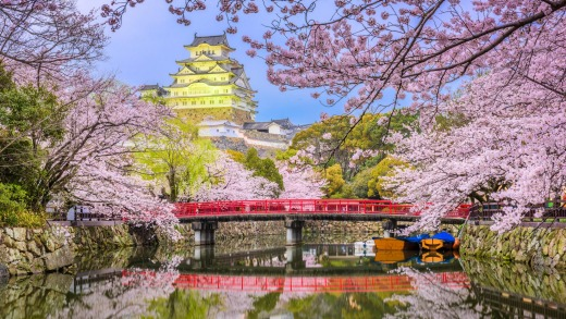 Himeji Castle during spring cherry blossom season, Japan.