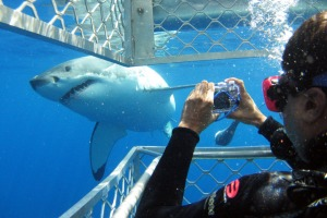 Smile!: Shark cage diving at Port Lincoln, South Australia.