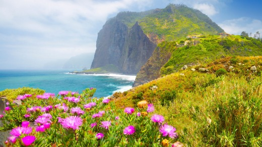 F7GTR2 Madeira - landscape with flowers and cliff coastline near Ponta Delgada, Madeira Island, Portugal