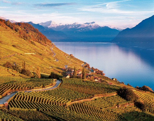 LAKE GENEVA, SWITZERLAND. The steep vineyard terraces that rise up from the shores of Lake Geneva between Lausanne and ...