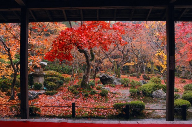 KYOTO TEMPLES, JAPAN. Japan's fabled cherry blossoms fade within a week, but autumn foliage provides a spectacle for ...