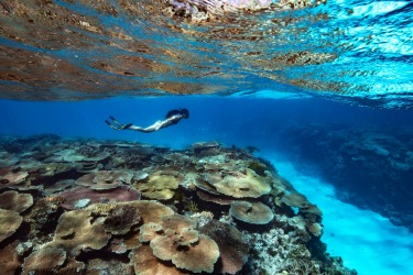 Gliding over fields of coral at Rib Reef off Orpheus Island, North Queensland.