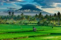 Rice fields near Ubud, Bali, with the volcanic peak of Gunung Agung in the background.