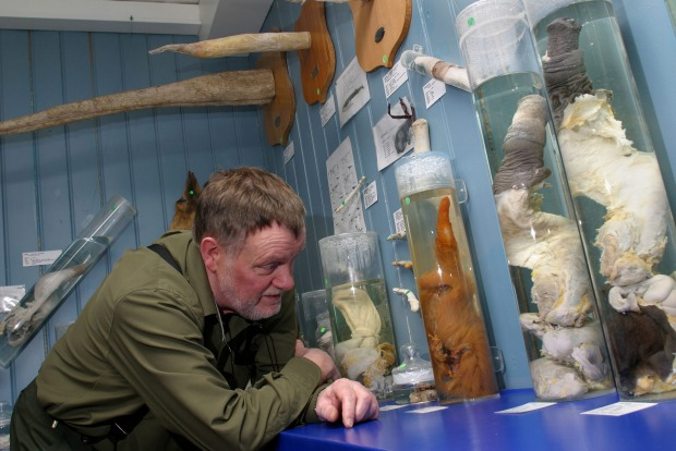 The world's only penis museum, in downtown Reykjavik, was created by a retired historian who developed an interest in ...